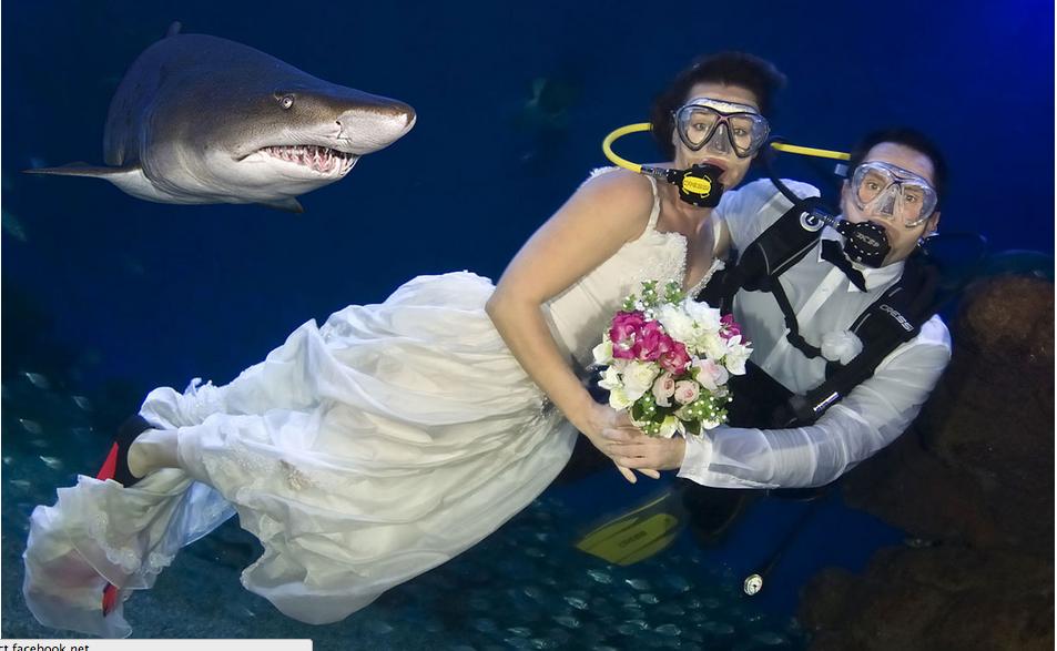Celebrada en el Palma Aquarium en Palma de Mallorca (España)